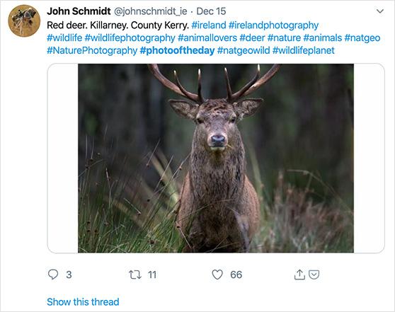 Popular twitter hashtags