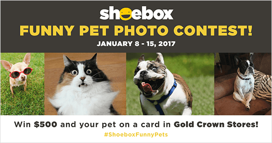 Funny pet photography giveaway ideas